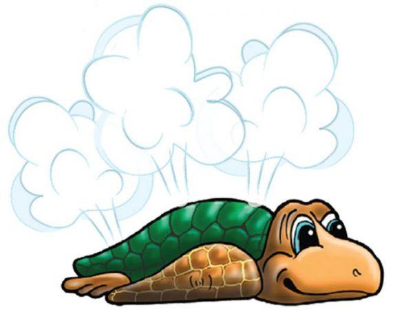 Tommy Sea Turtle Aqua Spout | Aquachem